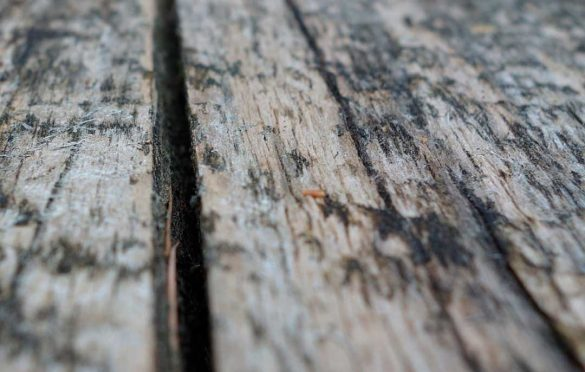 How To Get Rid Of Black Mold On Wood