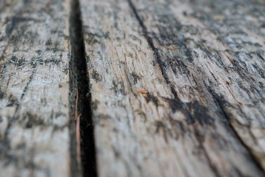 How To Get Rid Of Mildew >> How to Get Rid of Black Mold on Wood - The Complete Guide - House Cleaning Advice