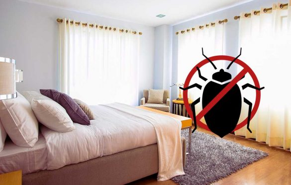 How to prevent bed bugs in an apartment