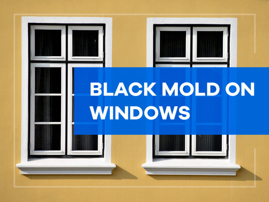 black mold on windows