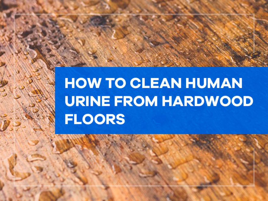 How to Clean Human Urine from Hardwood Floors