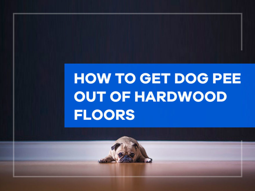 How to Get Dog Pee out of Hardwood Floors